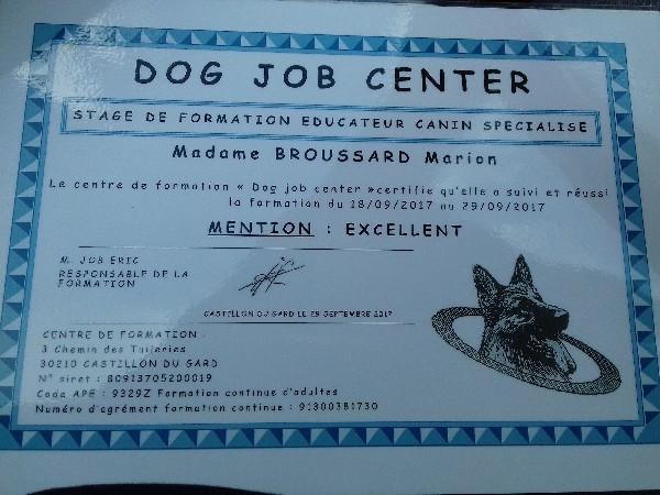 Formation éducateur canin spécialisé chez un 2nd formateur